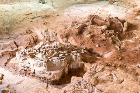 Talvez os maiores fósseis de dinossauros já encontrados