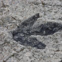 Parentes distantes dos dinossauros (parte 1)