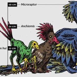 Você sabe qual foi o menor dinossauro do Mundo?