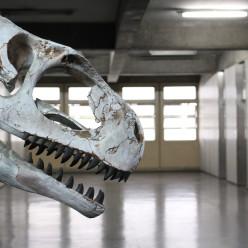Parentes distantes dos dinossauros (parte 2)
